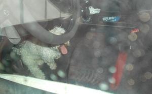 Deja a su perro en el coche a 38 grados