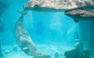 Todos los animales del Oceanogràfic de Valencia están a salvo tras el incendio