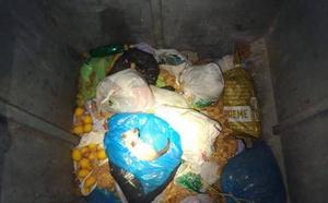 Los bomberos rescatan a un gato que estaba dentro de un contenedor soterrado en Benigembla