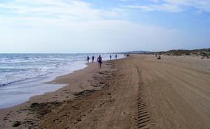 Tres playas de Elche, obligadas a cerrar por la mordida de un pez a unos niños