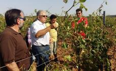 Agroseguro acelera las peritaciones en Utiel-Requena