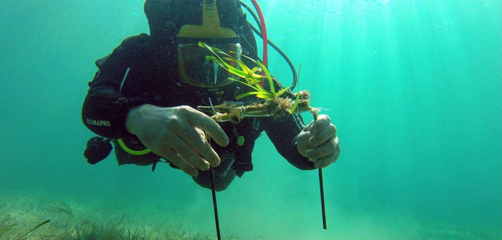 El milagroso bosque submarino de la posidonia