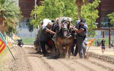 Centenares de caballos de l'Horta participan en tiro y arrastre de Torrent