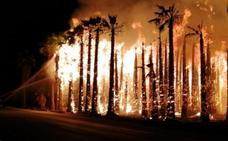 Detienen en Elche al presunto autor de cuatro incendios en huertos de palmeras