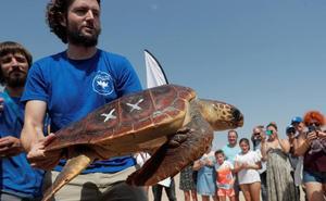 La campaña 'Tortugas en el Mediterráneo' llega a la playa de El Saler