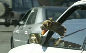Denunciada por dejar a su perro 45 minutos en el coche a 35 grados