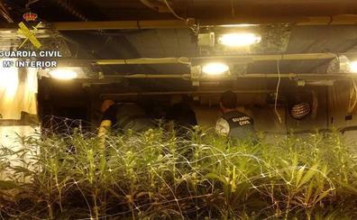 La Guardia Civil detienen en Calp a un hombre holandés por cultivar 800 plantas de marihuana