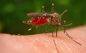 ¿Funcionan de verdad las pulseras repelentes y los aparatos de ultrasonidos contra los mosquitos?