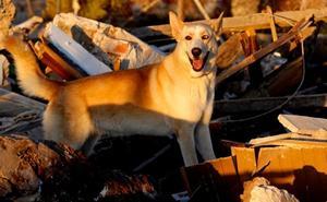 Los bomberos de Alicante se despiden de la perra Maya tras años de servicio y decenas de rescates