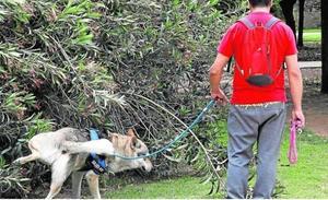 Los peligros de echar azufre en las calles contra el orín de los perros