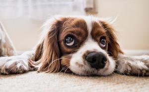 ¿Sabrías salvar a tu perro?