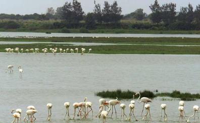Doñana cumple 50 años tras superar numerosas amenazas para su entorno