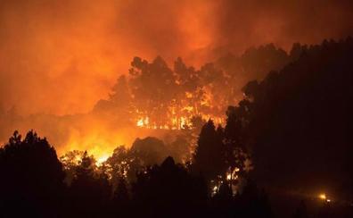 Salvan de las llamas a la famosa burrita de Cruz de Tejeda
