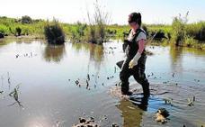 El brote de bolutismo aviar de la Albufera podría estar erradicado