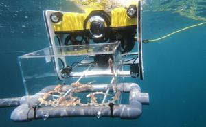 Un dron para las crías de tiburón