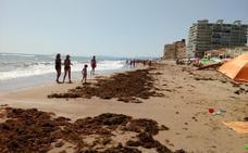 El temporal arrastra algas a la orilla y llena de arena la playa de la Goleta