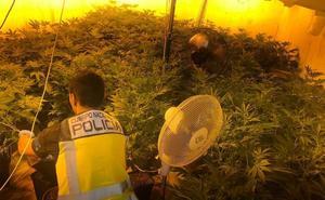 Detenida una familia por cultivar marihuana en un laboratorio de su casa de Daimús