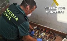 Detenido por maltratar y tener en condiciones insalubres a seis perros y aves protegidas en Valencia