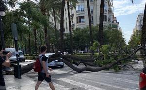 Cortan al tráfico Reino de Valencia por la caída de un árbol