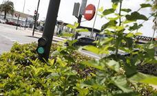 Semáforos y señales tapados por las hojas de los árboles en Valencia
