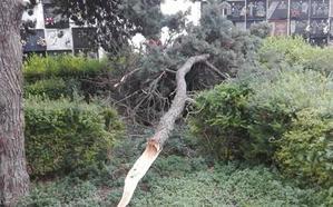 El temporal derriba ramas de árboles en Gandia y deja desperfectos en las playas