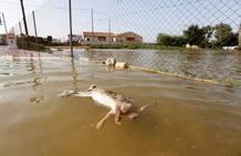 Las imágenes más impactantes del temporal que ha asolado durante cinco días la Comunitat