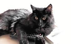 La mascota de Soraya Pla, un gato mitológico