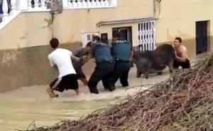 La Guardia Civil rescata animales de las inundaciones en Orihuela