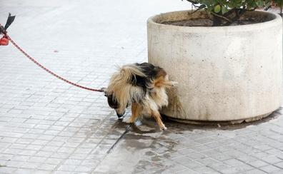 Vecinos denuncian la suciedad canina y piden más multas y zonas acotadas