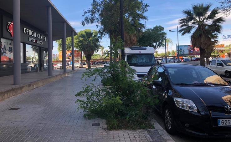 Los matorrales ganan a los árboles en Valencia