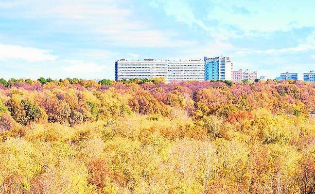 La ONU estudia plantar bosques urbanos en Asia y África
