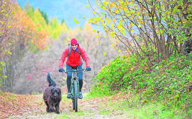 Claves para pasear con tu perro en bicicleta