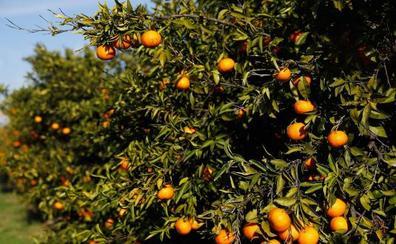 Grupo Atitlan compra la empresa murciana Frutas Romu