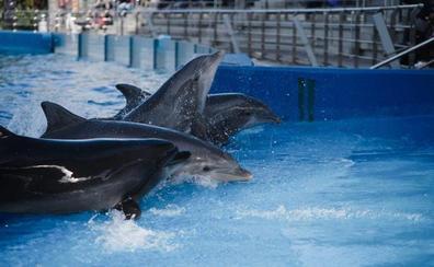 L'Oceanogràfic confirma que la nueva cepa del virus más letal para cetáceos circula por todo el Mediterráneo