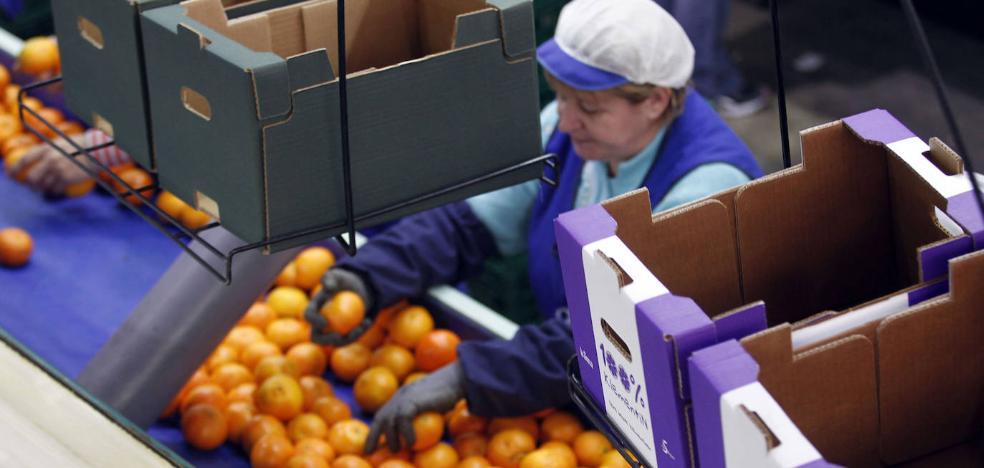 Sudáfrica acumula 17 detecciones de plagas en sus envíos citrícolas a Europa