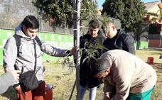 Paterna instalará un contador de árboles para informar de las replantaciones