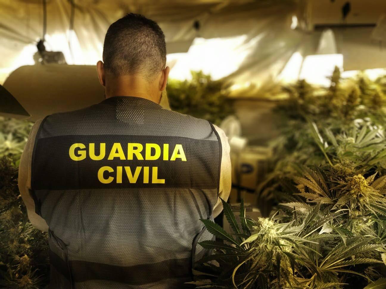 La Guardia Civil desmantela un invernadero de marihuana en la Vall d'Ebo