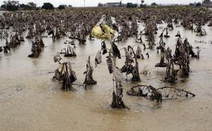 Los agricultores temen quedarse sin ayudas por la gota fría ante la pasividad del Gobierno