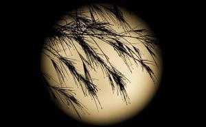 ¿Qué es la 'Luna del Cazador' que se ha visto esta noche en Valencia?