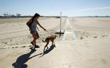 Alicante regula por primera vez las playas para perros