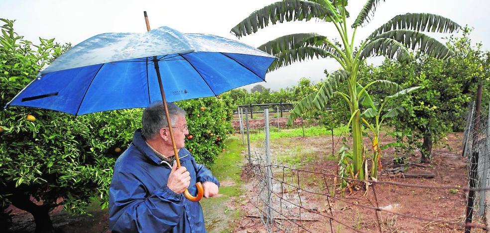 Los agricultores denuncian una oleada de robos de aguacate con riesgo para el consumo