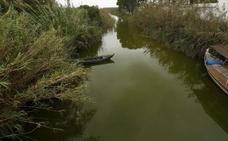 La falta de limpieza de las acequias agrava el daño ambiental en la Albufera