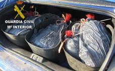 Incautados cien kilos de pulpo en dos vehículos
