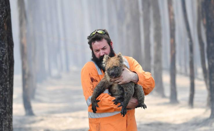 Así están afectando los incendios de Australia a los animales