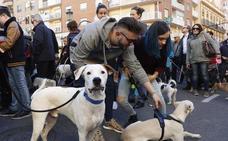 Bendición de animales 2020: horario en Valencia y otras localidades
