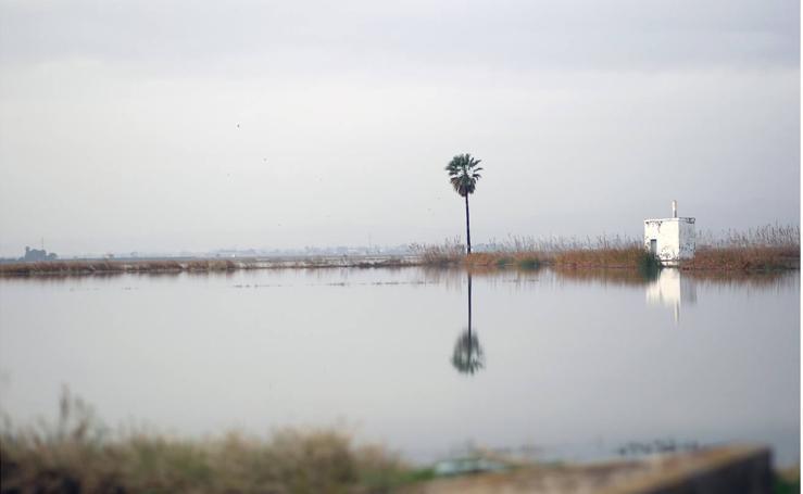 Los arrozales de la Albufera
