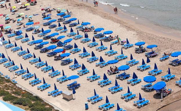 Vista de una zona de hamacas en la playa de Poniente de Benidorm prácticamente vacía.