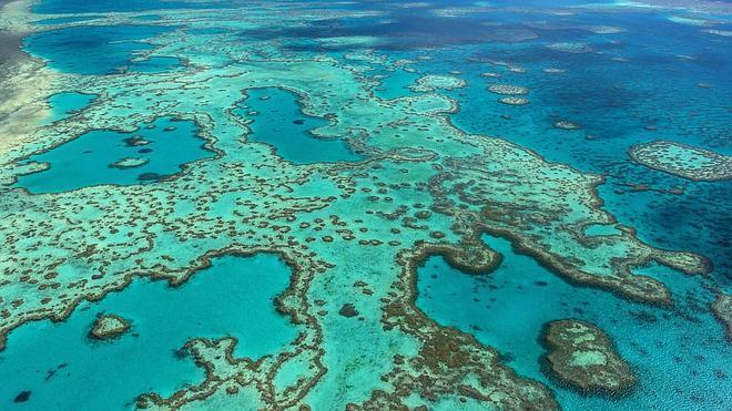Un leve aumento del mar tendrá un gran impacto en la Gran Barrera de Coral