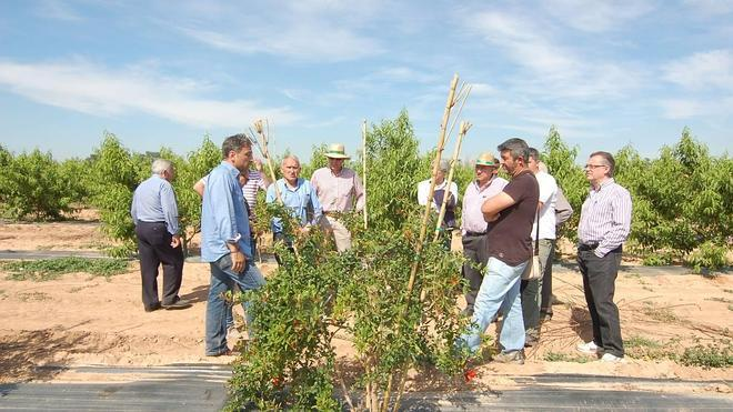 Agricultores se interesan por las nuevas variedades cultivadas en el Hort de Redal