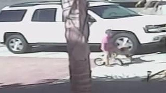 Un gato salva a un niño del ataque de un perro callejero